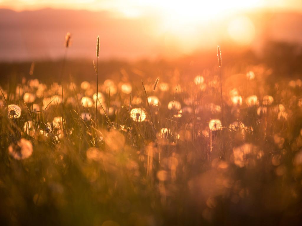 Blumenwiese | Sommerliche Blumenwiese in der Rheinebene