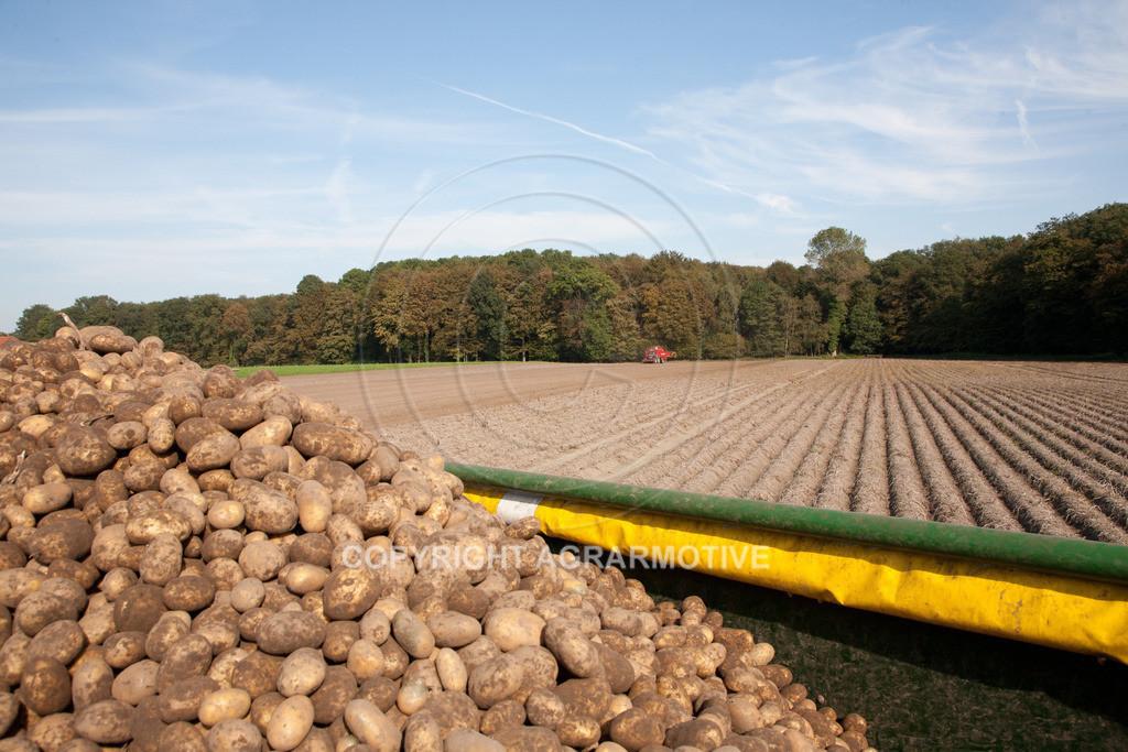 20110929-IMG_5940 | Ernte auf einem Kartoffelfeld - AGRARBILDER