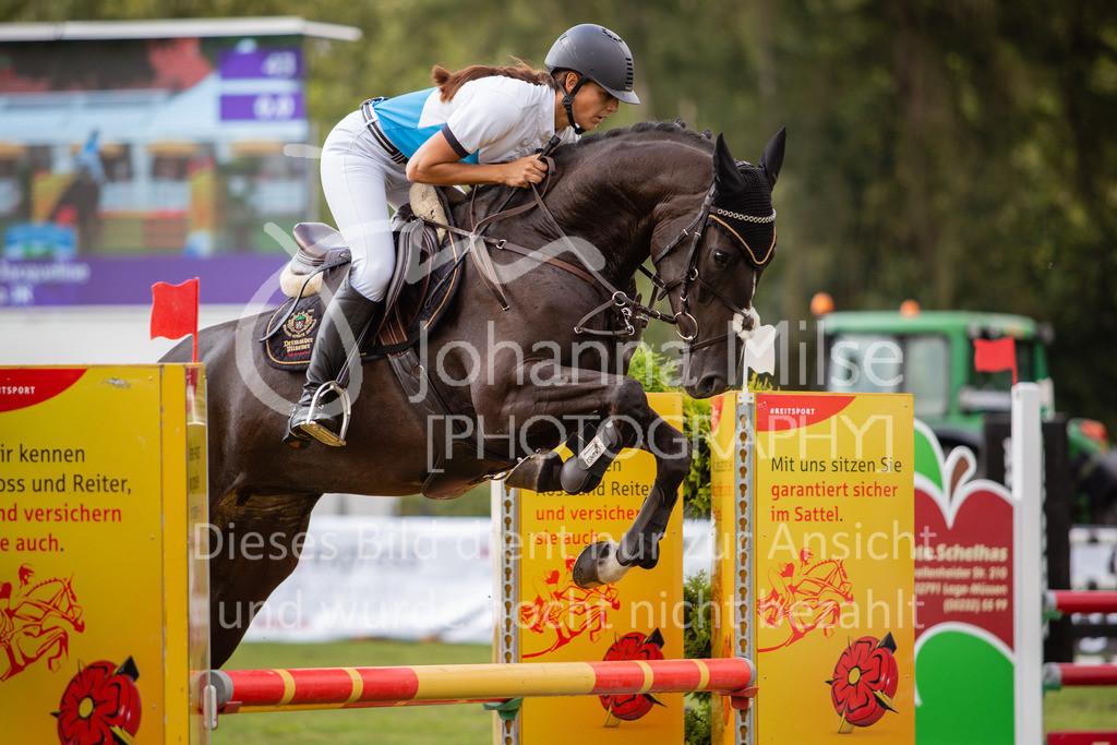190719_LC_SprPf-A-015 | Lopshorn Classics 2019 Springpferdeprüfung Kl. A** 4-5 jährige Pferde