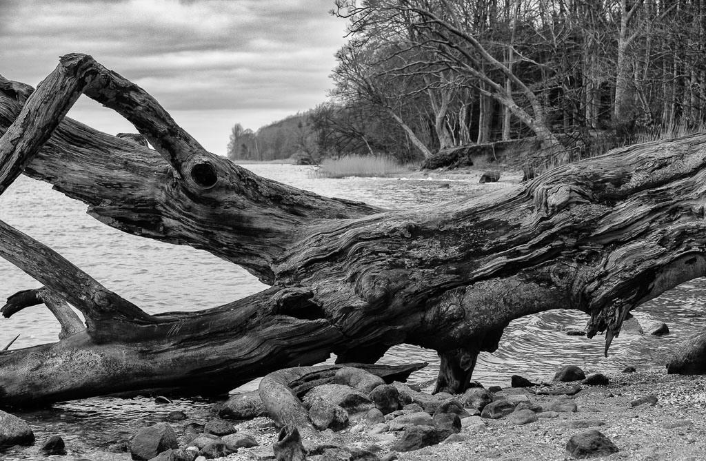Schleiufer bei Büstorf © Holger Rüdel | Am Südufer der Schlei, zwischen Büstorf und Gut Stubbe, führt ein Wanderweg an einem wildromantischen Küstenabschnitt des Ostsee-Meeresarmes vorbei.