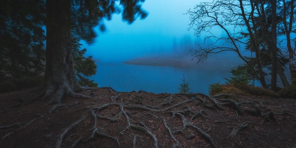 Blaue Stunde am Oderteich   Morgens am Oderteich