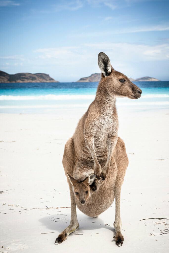 Kangaroo 1 - Lucky Bay - Esperance