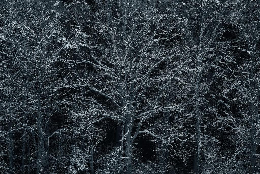 Waldrand im Winter | Winterlicher, verschneiter Waldrand am Totengrund in der Lüneburger Heide. Eine ganz besonderer Juwel unter den Heidelandschaften