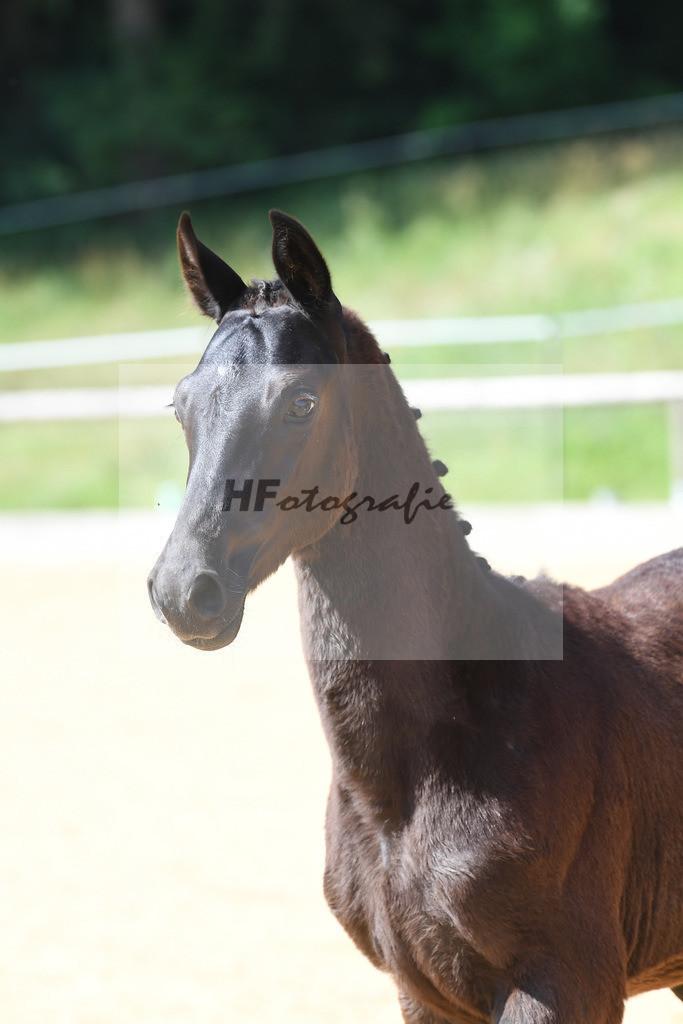 Kat-Nr. 15 HF Bon Coeur_Dobner_3221397