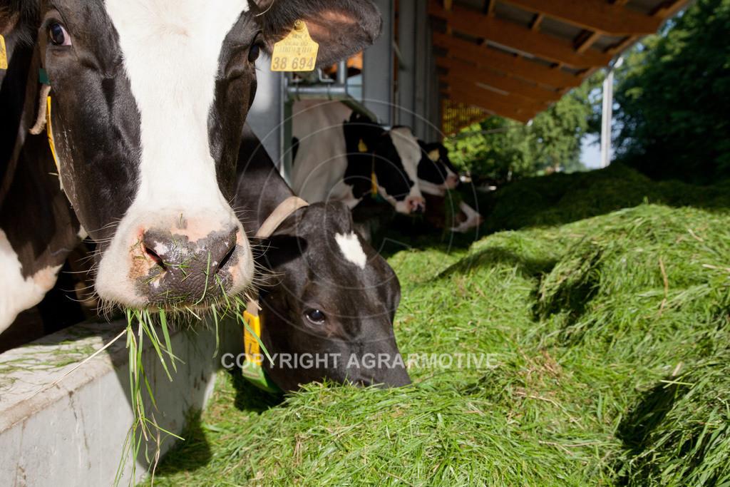 20110627-IMG_3003 | Milchkühe im Boxenlaufstall