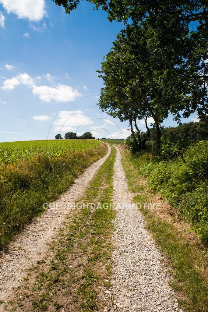 20090613-IMG_3180 | Symbolbild Zukunft - AGRARMOTIVE Bilder aus der Landwirtschaft