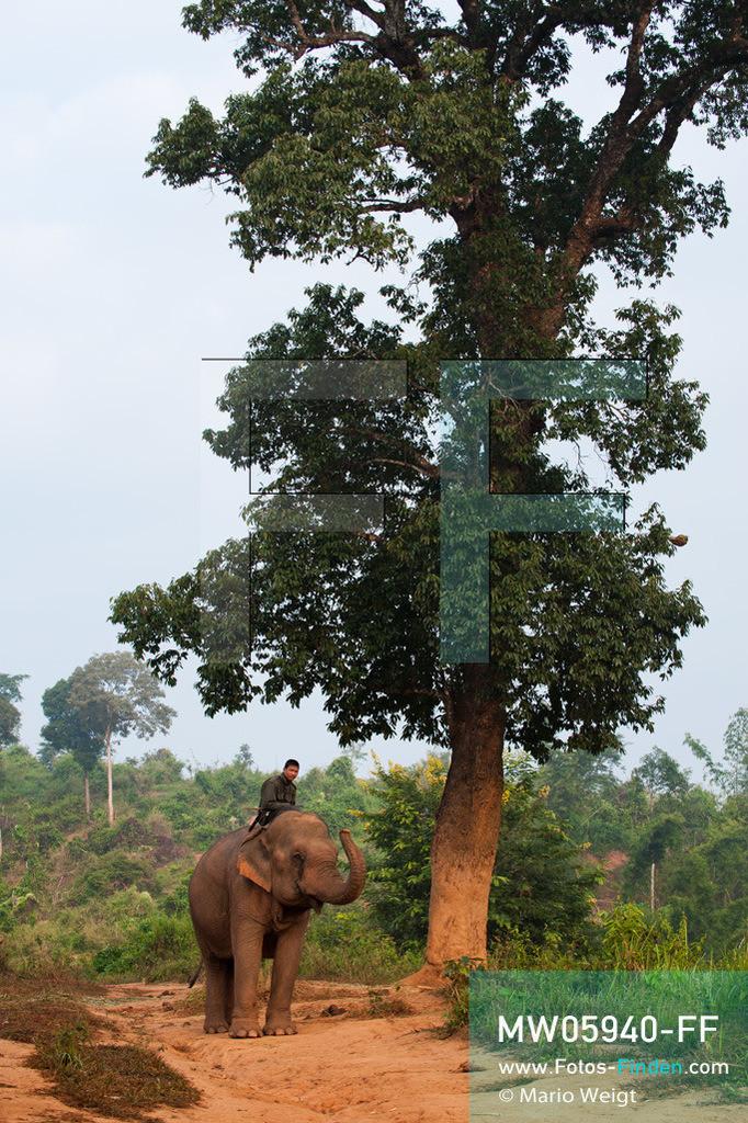 MW05940-FF   Thailand   Goldenes Dreieck   Reportage: Mahut und Elefant - Ein Bündnis fürs Leben   Mahut auf seinem Elefant im Morgenlicht   ** Feindaten bitte anfragen bei Mario Weigt Photography, info@asia-stories.com **