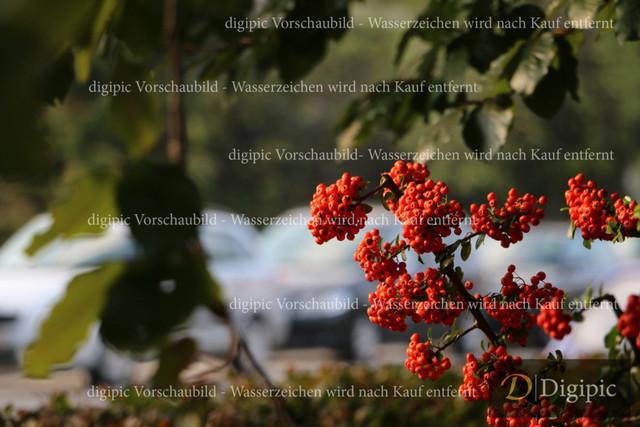 Strauch (3)-Vorschaubild