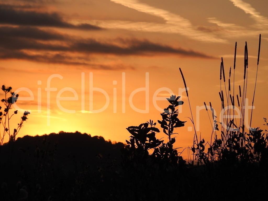 Goldene Stunde in der Vulkaneifel | Sonnenaufgang / goldenen Stunde in der Eifel