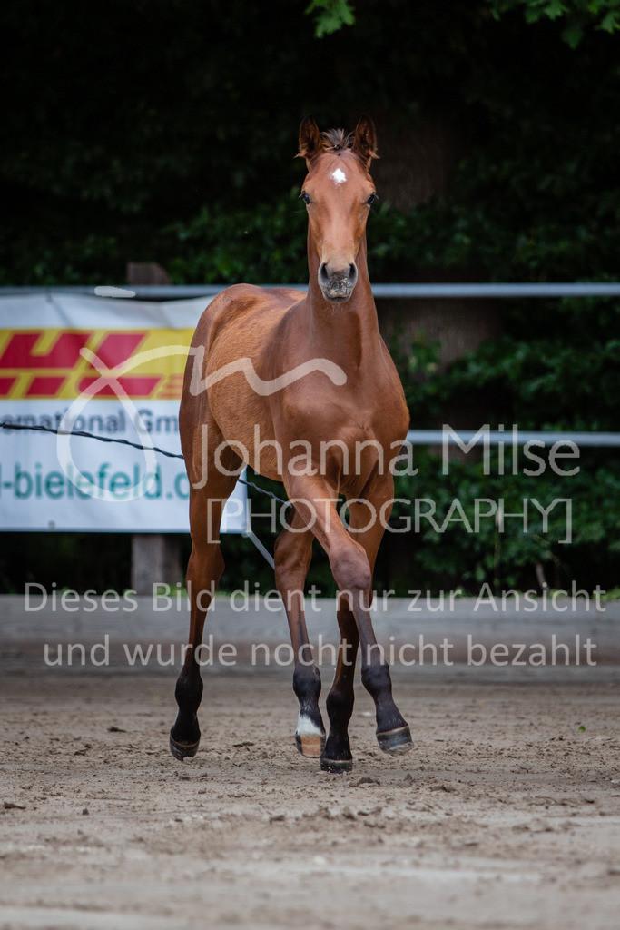 190703_Fohlenschau_WuC-042 | Holsteiner Fohlenschau 2019 - Stutfohlen