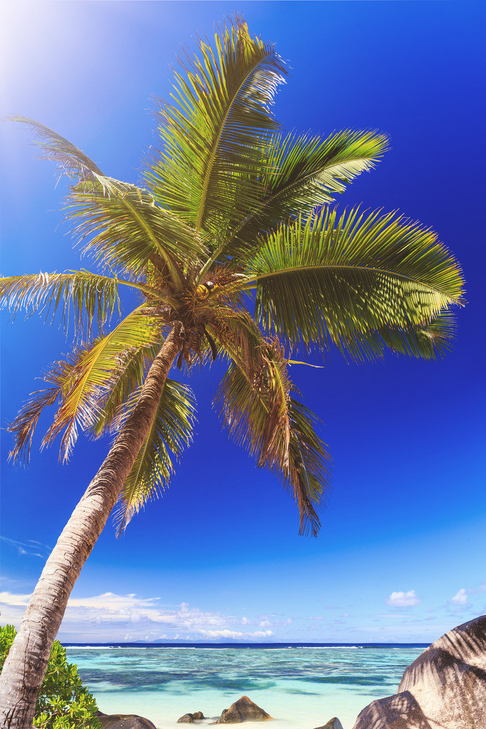 149-Seychellen-Anse source d_argent-1