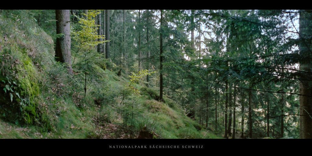 Sächsische Schweiz Elbsandsteingebirge | Nadelwald im Nationalpark Sächsische Schweiz im Elbsandsteingebirge
