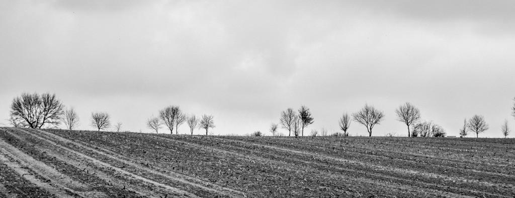 130330_1138-4977 | Teufelsmoor im Winter