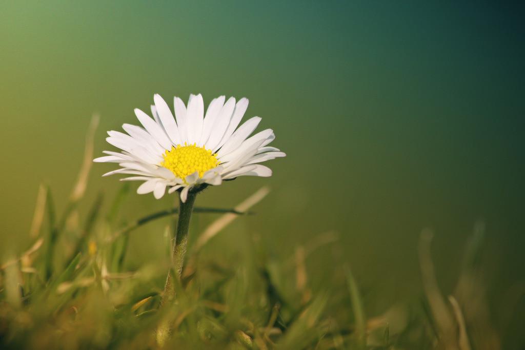 143-Blume