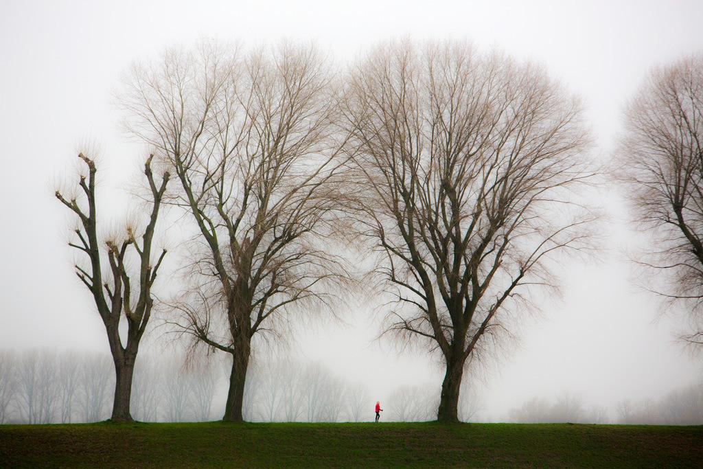 JT-130225-029 | Tristes Winterwetter, Nebel, kahle Bäume, Rheindamm bei Düsseldorf-Stockum. Frau beim Walken, mit Walking-Sticks.