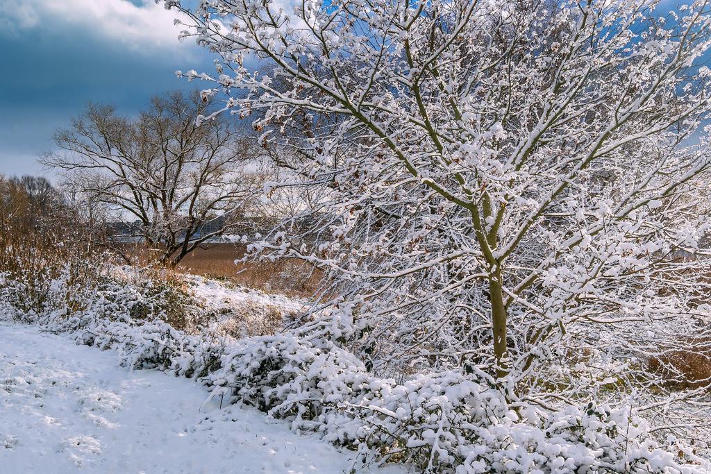 Bäume am Ufer der Warnow in der Hansestadt Rostock im Winter | Bäume am Ufer der Warnow in der Hansestadt Rostock im Winter.