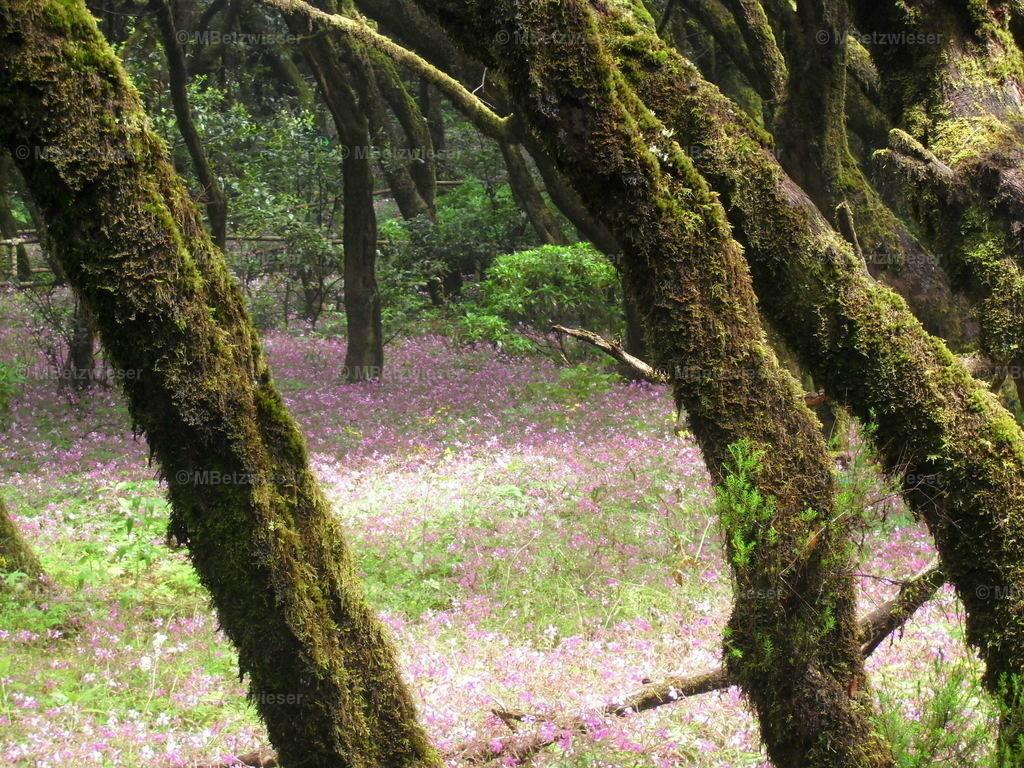DSCF0037-5 | Nach dem Waldbrand kommen neue Blüten