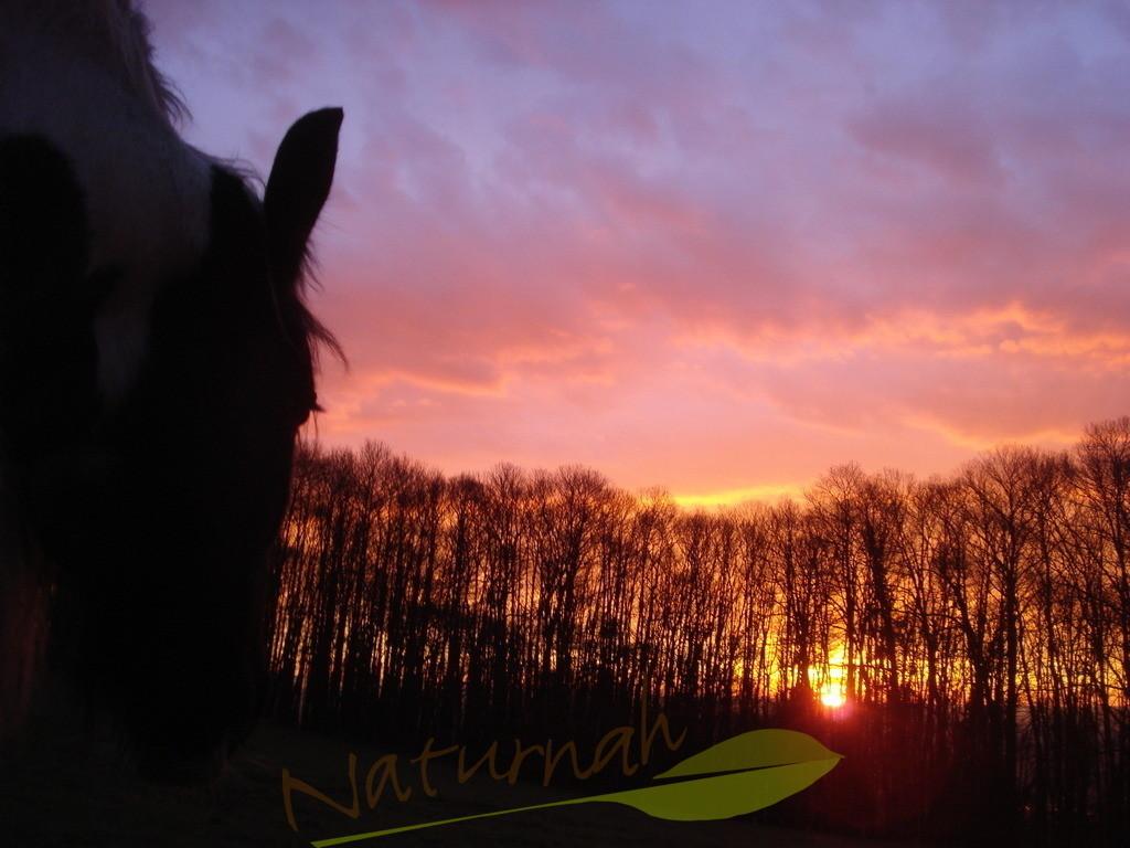 Sonnenaufgang mit Pferd | Was will man mehr, wenn der Tag bei einem Pferd mit diesem Sonnenaufgang beginnt. Fühlst Du die Magie?