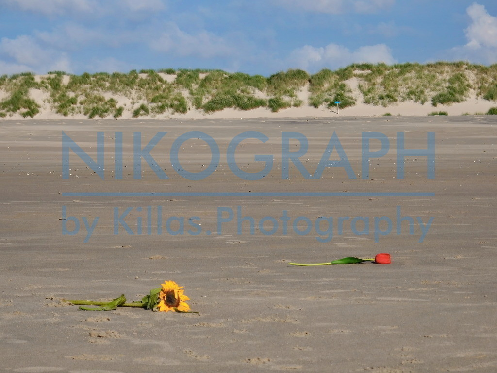 Blumen am Strand | Eine Sonnenblume un deine Tulpe am Strand von Texel bei De Cocksdorp.