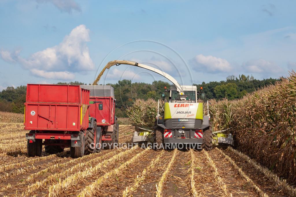 20080914-IMG_8942 | Silomais wird gehäckselt - AGRARFOTO Bilder aus der Landwirtschaft