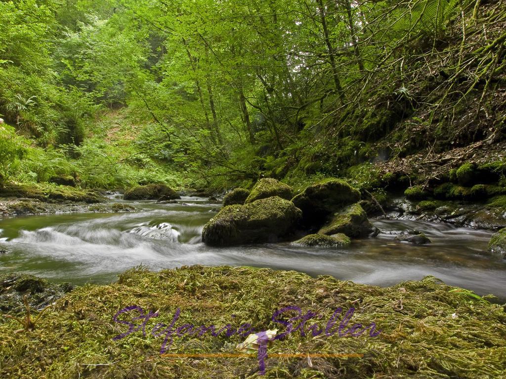 Lydforge Gorge   In der Nähe des Dartmoor finden sich die Lydforge Gorge