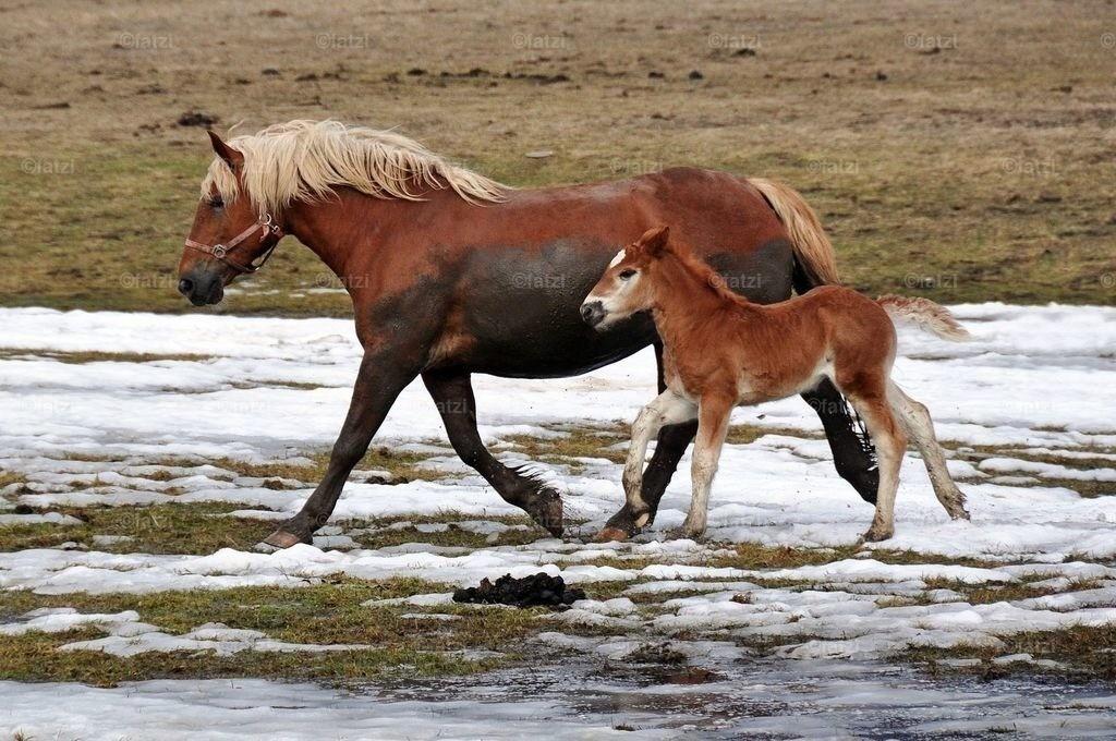 pferde-200310_015k