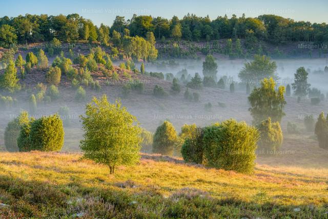 Morgens im Totengrund in der Lüneburger Heide   Spätsommerliche Morgenstimmung im nebligen Totengrund in der Lüneburger Heide. Die Sonne kommt langsam über den Berg und strahlt die Landschaft mit ihrem warmen Licht an.