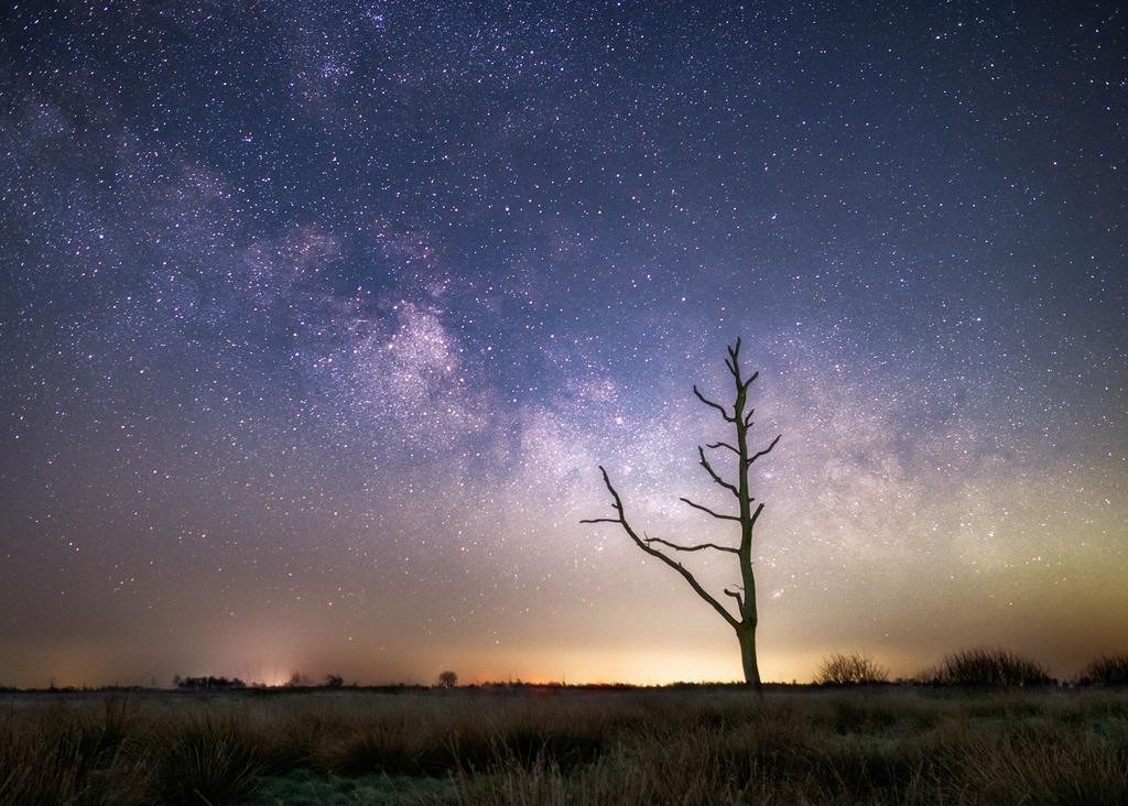 Reaching Out | Ein toter Baum im Moor unter dem Zentrum der Frühlingsmilchstraße