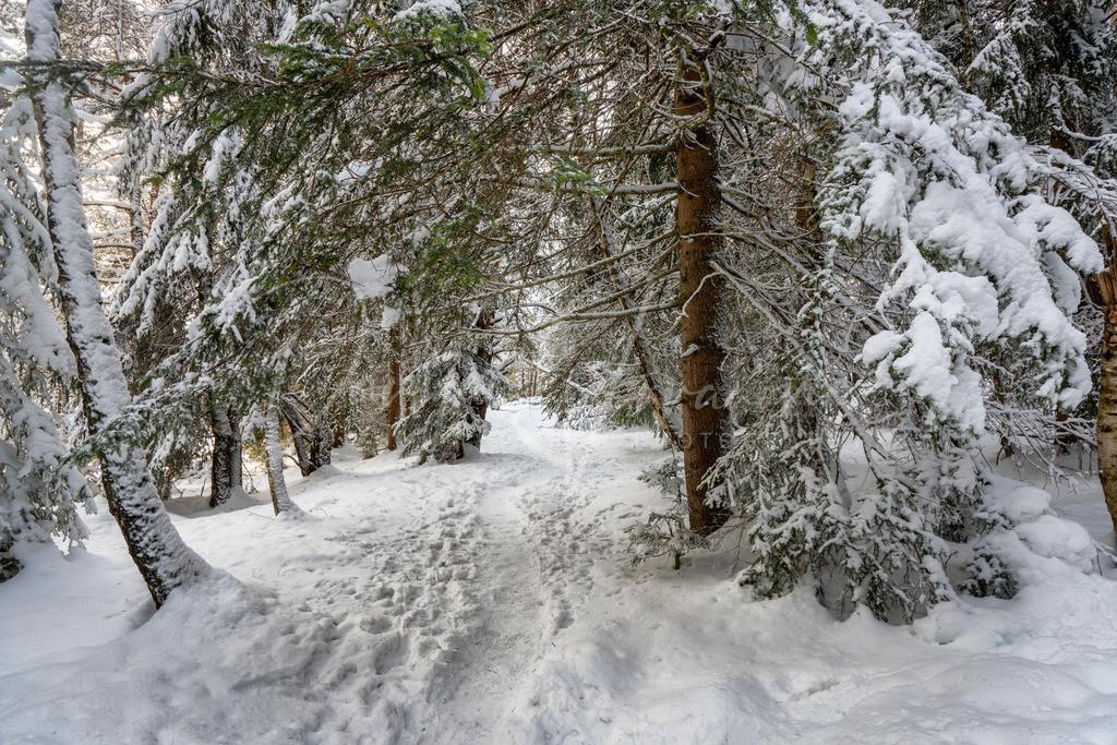 Winterspaziergang | Winter Wunderland