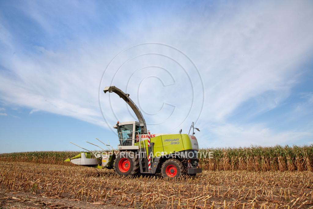 20080914-IMG_8930 | Silomais wird gehäckselt - AGRARFOTO Bilder aus der Landwirtschaft