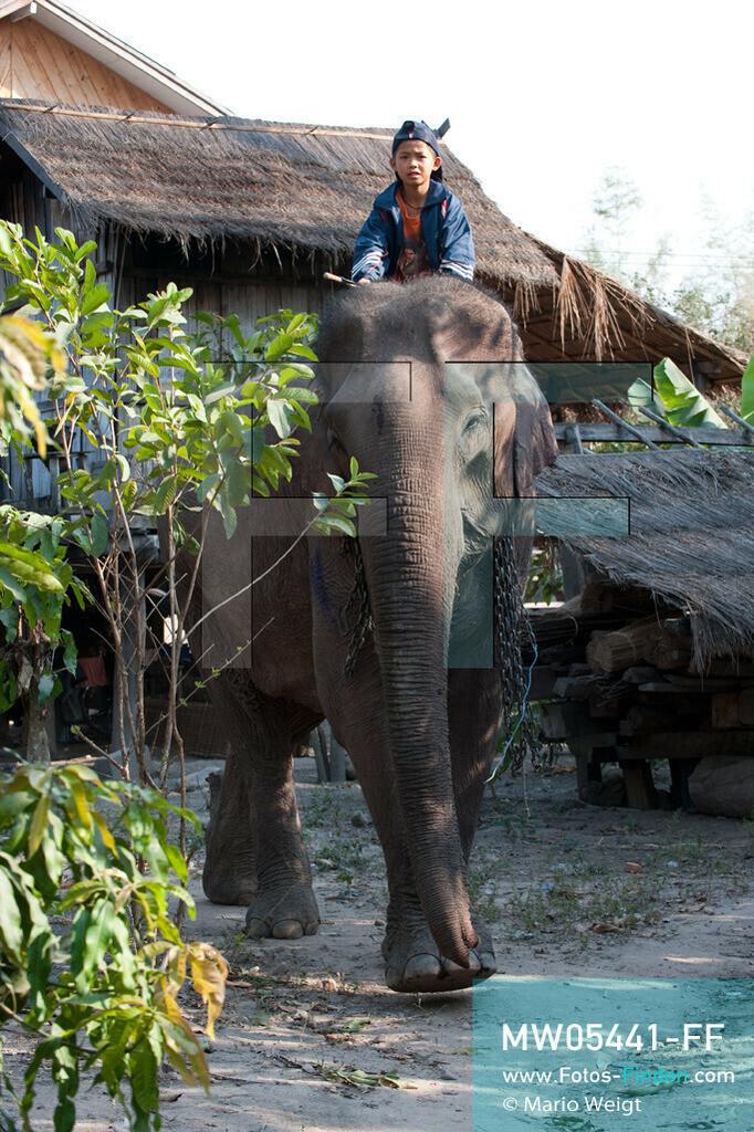 MW05441-FF | Laos | Provinz Sayaboury | Vieng Keo | Reportage: Pey Wan im Elefantendorf | Stolz sitzt Pey Wan auf dem Elefant Boun Van. Der achtjährige Pey Wan lebt im Elefantendorf Vieng Keo im Nordwesten von Laos. Im Dorf wohnen ca. 500 Leute mit 17 Arbeitselefanten. Sein Vater Hom Peng hat einen 31 Jahre alten Elefantenbullen namens Boun Van, mit dem er im Holzfällercamp im Dschungel arbeitet. Zum Elefantenfest schmückt Pey Wan den Jumbo und darf mit ihm an der Prozession durchs Dorf teilnehmen. Pey Wan möchte, wie sein Vater, später auch Elefantenführer werden.   ** Feindaten bitte anfragen bei Mario Weigt Photography, info@asia-stories.com **