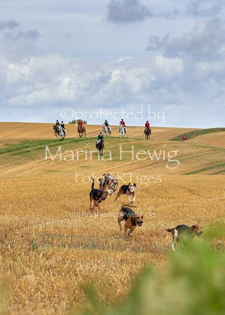 Jagd Knoop 217499_Marina Hewig