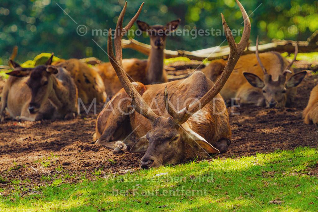 Wildpark-Kaiserslautern_20210918_0935