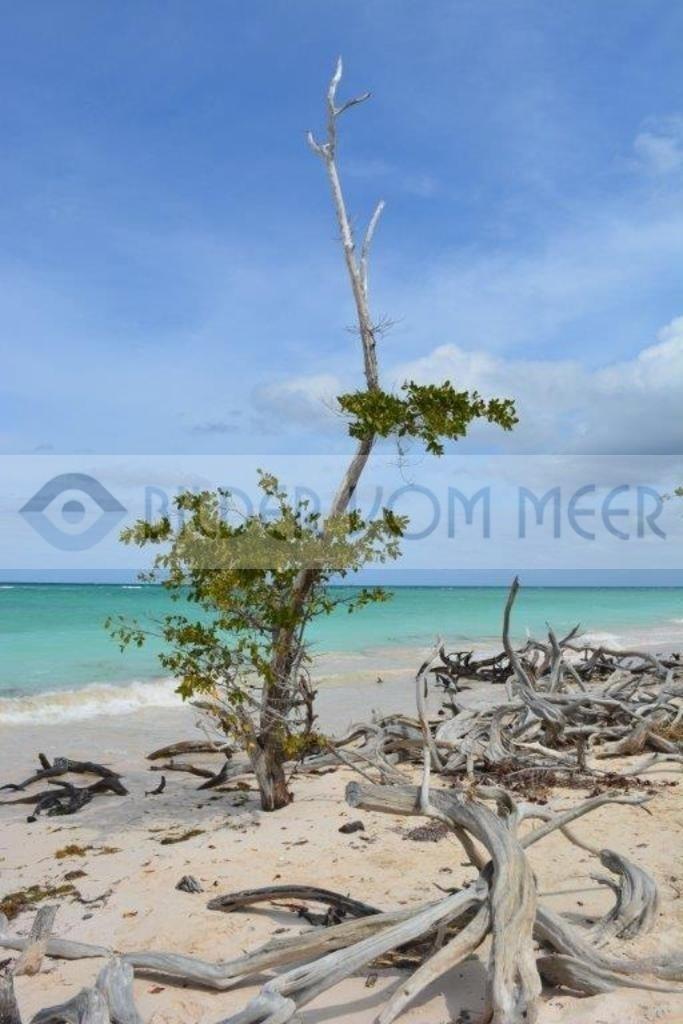 Bilder vom Meer: Baum im Wasser | Strandbilder am karibischen Meer