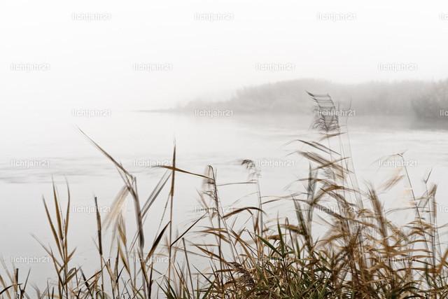 Nebelstimmung im Oderbruch | Von leichtem Wind elegant bewegte Halme und Gräser am Ufer der Oder im Vordergrund, dichter Morgennebel macht den Hintergrund nur schemenhaft erkennbar, erkennbare Bewegung durch dezente Langzeitbelichtung - Location: Deutschland, Oderbruch
