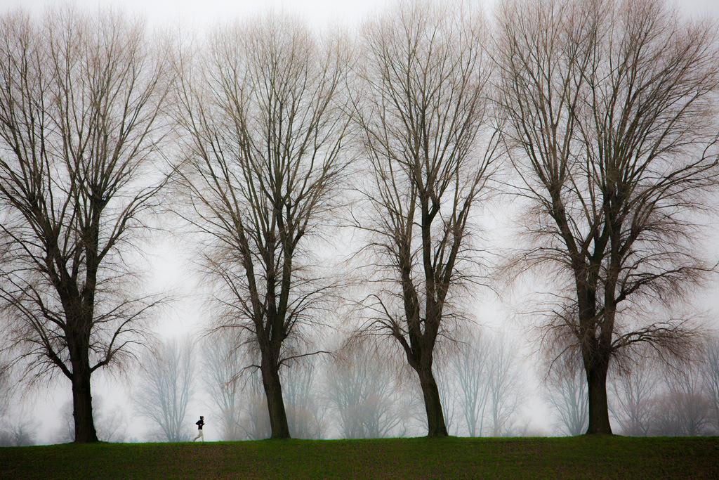 JT-130225-028 | Tristes Winterwetter, Nebel, kahle Bäume, Rheindamm bei Düsseldorf-Stockum. Jogger.