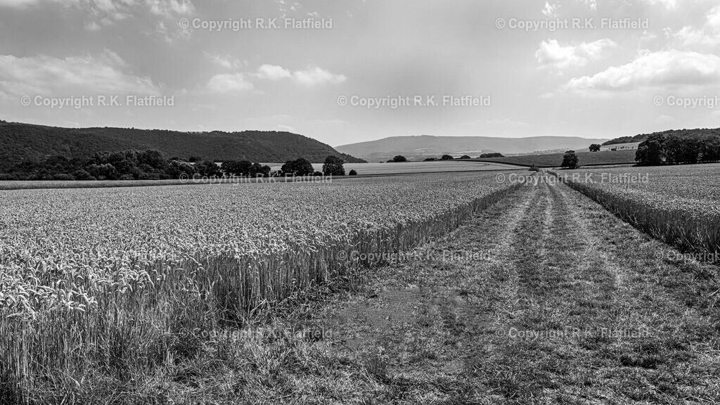 Feld und Weg   Rheinburgenweg