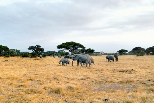 The Savanna | Elefantenherde bei der Abenddämmerung im Amboseli Nationalpark in Kenia