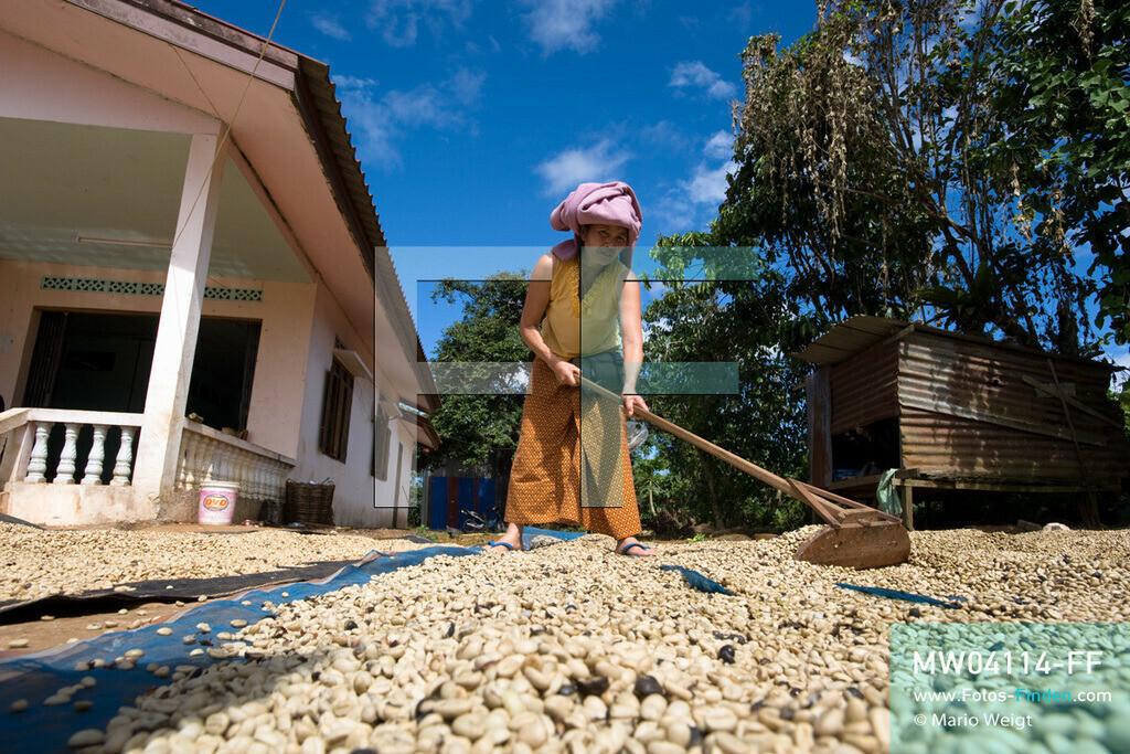 MW04114-FF | Laos | Paksong | Reportage: Kaffeeproduktion in Laos | Gewaschene Kaffeebohnen werden in der Sonne getrocknet und mehrmals gewendet. In den Plantagen auf dem Bolaven-Plateau gedeihen Sträucher der Kaffeesorten Robusta und Arabica.  ** Feindaten bitte anfragen bei Mario Weigt Photography, info@asia-stories.com **