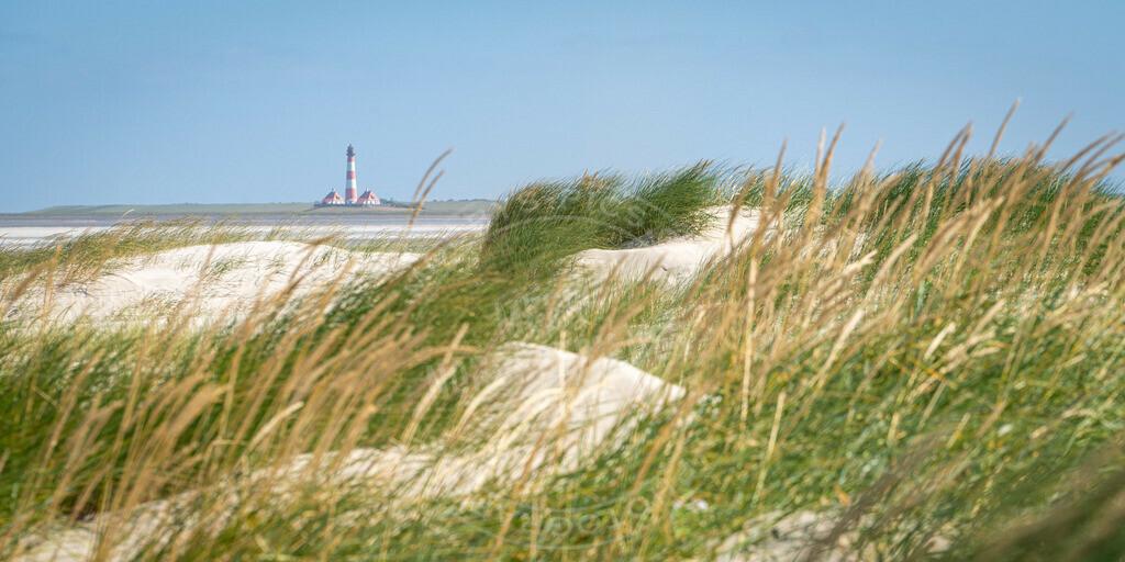DSC4222 | Blick über die Dünen nach Westerhever