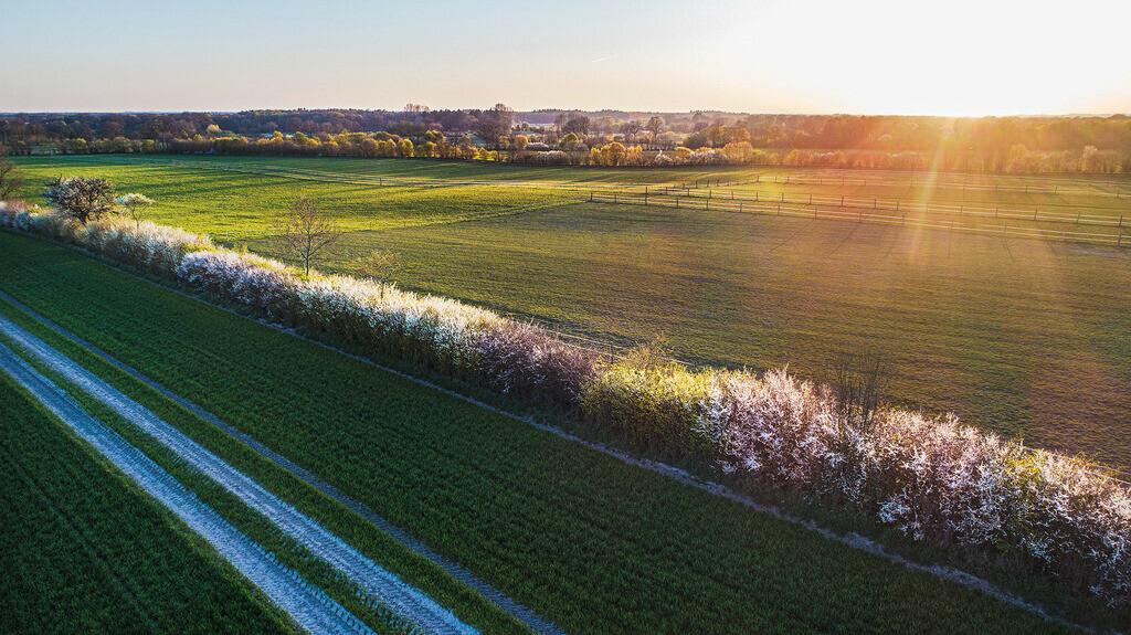 farbiger Frost | Blühender Knick im Raureif, zwischen Jersbek und Bargfeld-Stegen, Stormarn