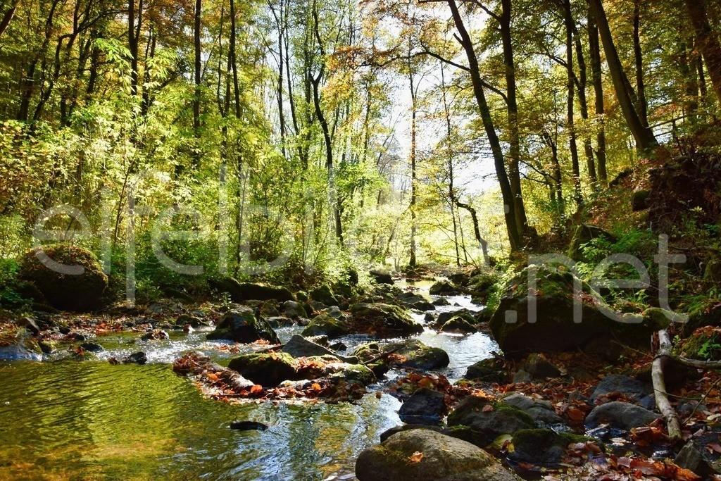 Alfbach / Alfbachtal | Vulkaneifel