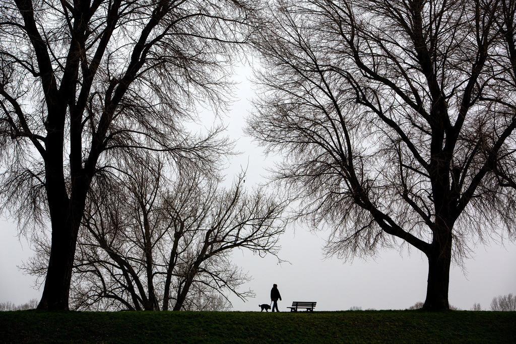 JT-130225-018   Tristes Winterwetter, Nebel, kahle Bäume, Rheindamm bei Düsseldorf-Stockum. Frau mit Hund beim Spaziergang.