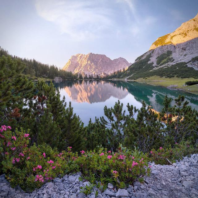 Blütenpracht am Alpensee | Die Zugspitze allein ist bereits ein tolles Bild. Zusammen mit einem fast spiegelglatten See und der Blütenpracht am Ufer ergeben sie ein Traummotiv.