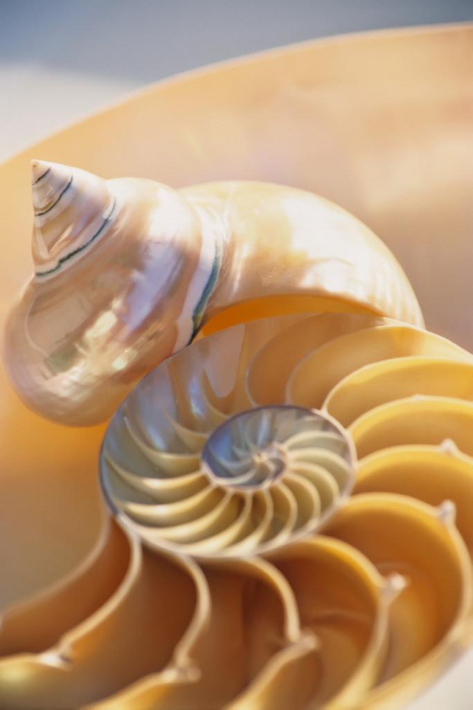 Best. Nr. kreativität05   Meeresschnecke und Nautilus