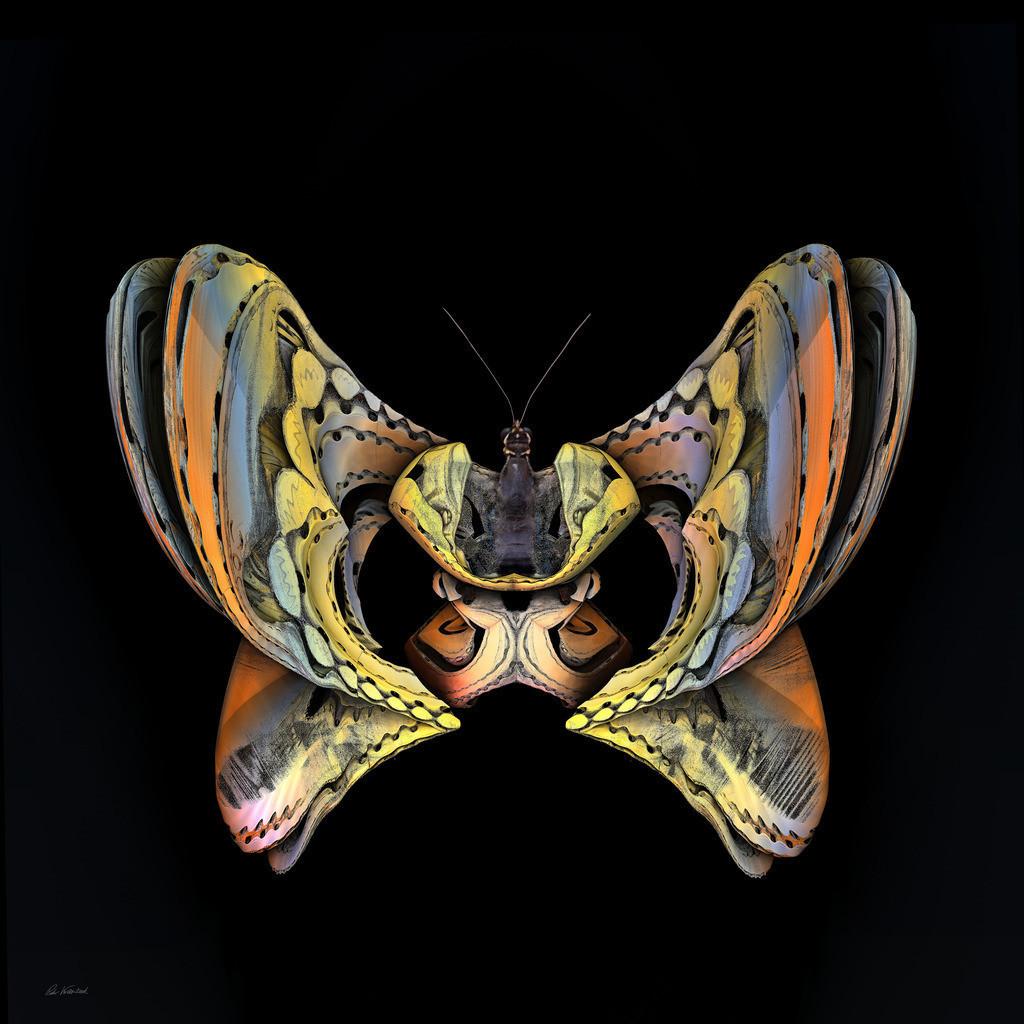 Metal Butterfly | Metal Butterfly