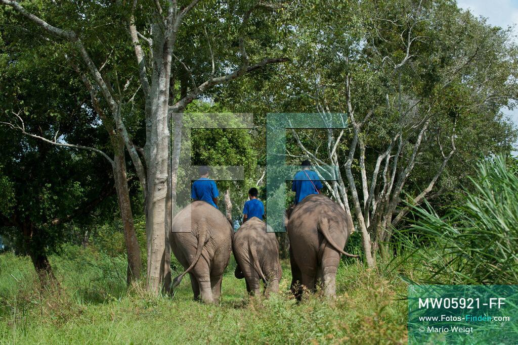 MW05921-FF   Thailand   Goldenes Dreieck   Reportage: Mahut und Elefant - Ein Bündnis fürs Leben   Mahuts auf ihren Elefanten im Dschungel   ** Feindaten bitte anfragen bei Mario Weigt Photography, info@asia-stories.com **