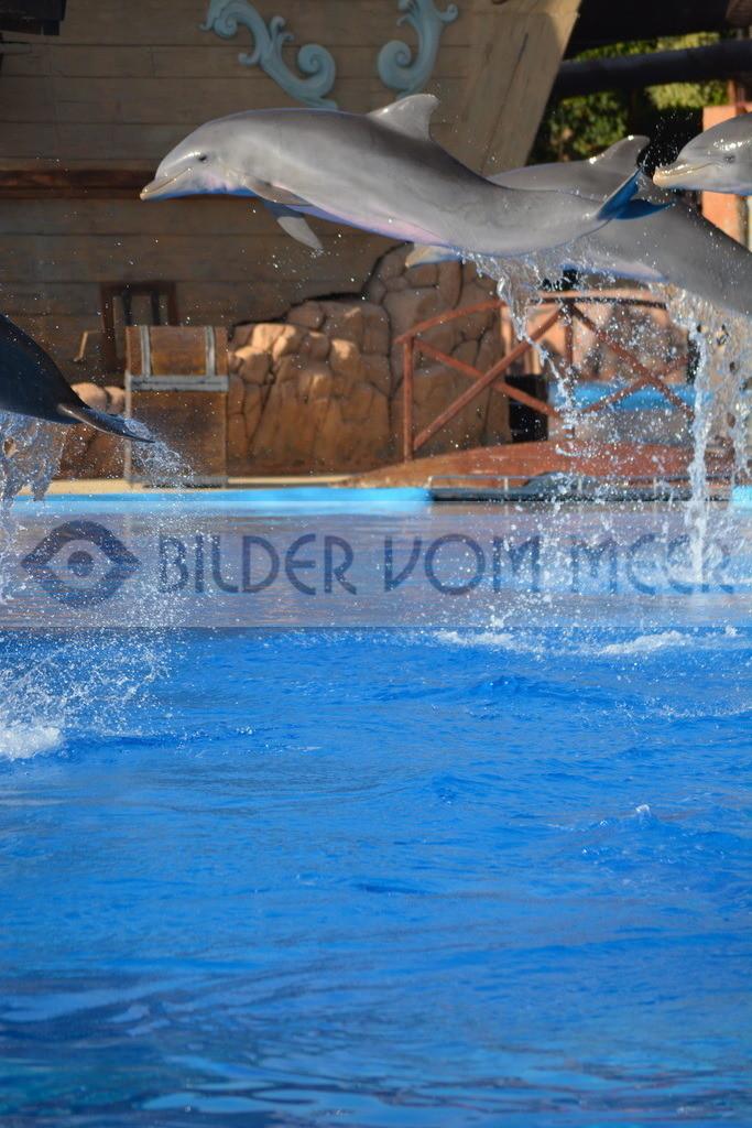 Delfin Bilder | Foto springender Delfin Spanien