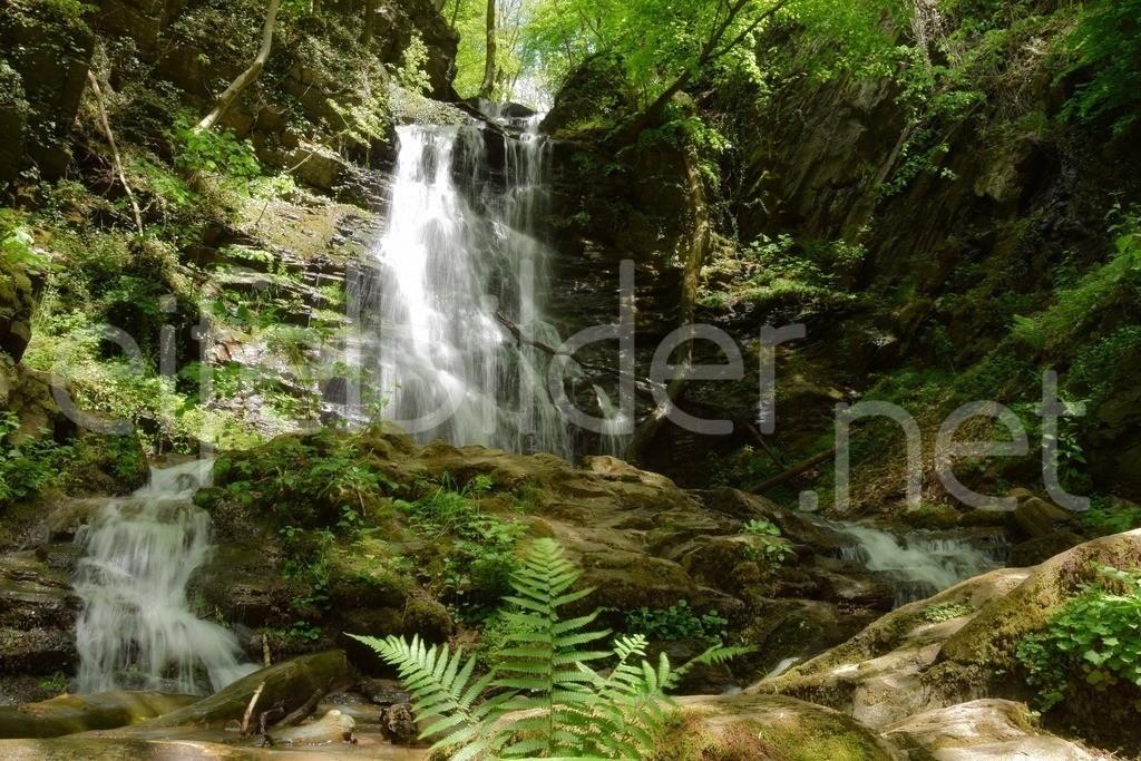 Zauberhafter Eifelwald mit Wasserfall | Mystische Stimmung am Wasserfall, fotografiert in der Eifel (Vulkaneifel)