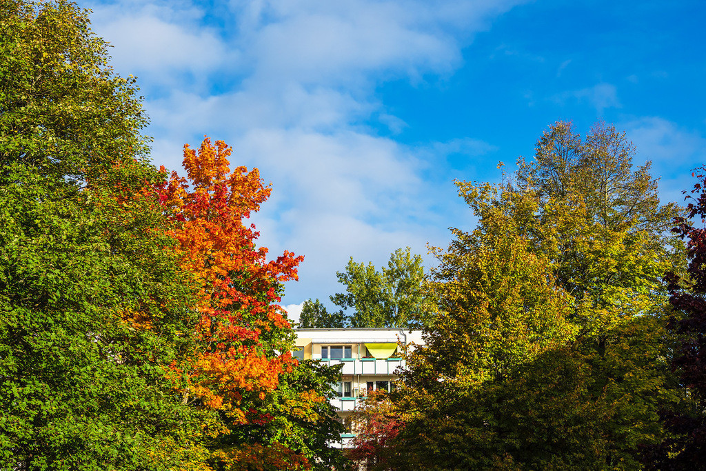Blick auf herbstlich gefärbte Bäume in der Hansestadt Rostock | Blick auf herbstlich gefärbte Bäume in der Hansestadt Rostock.